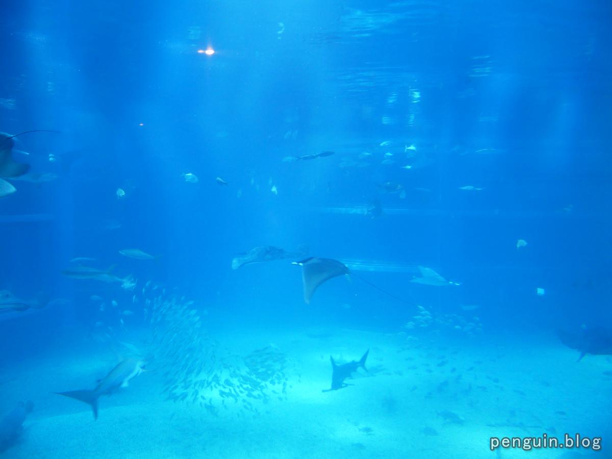 太平洋水槽2