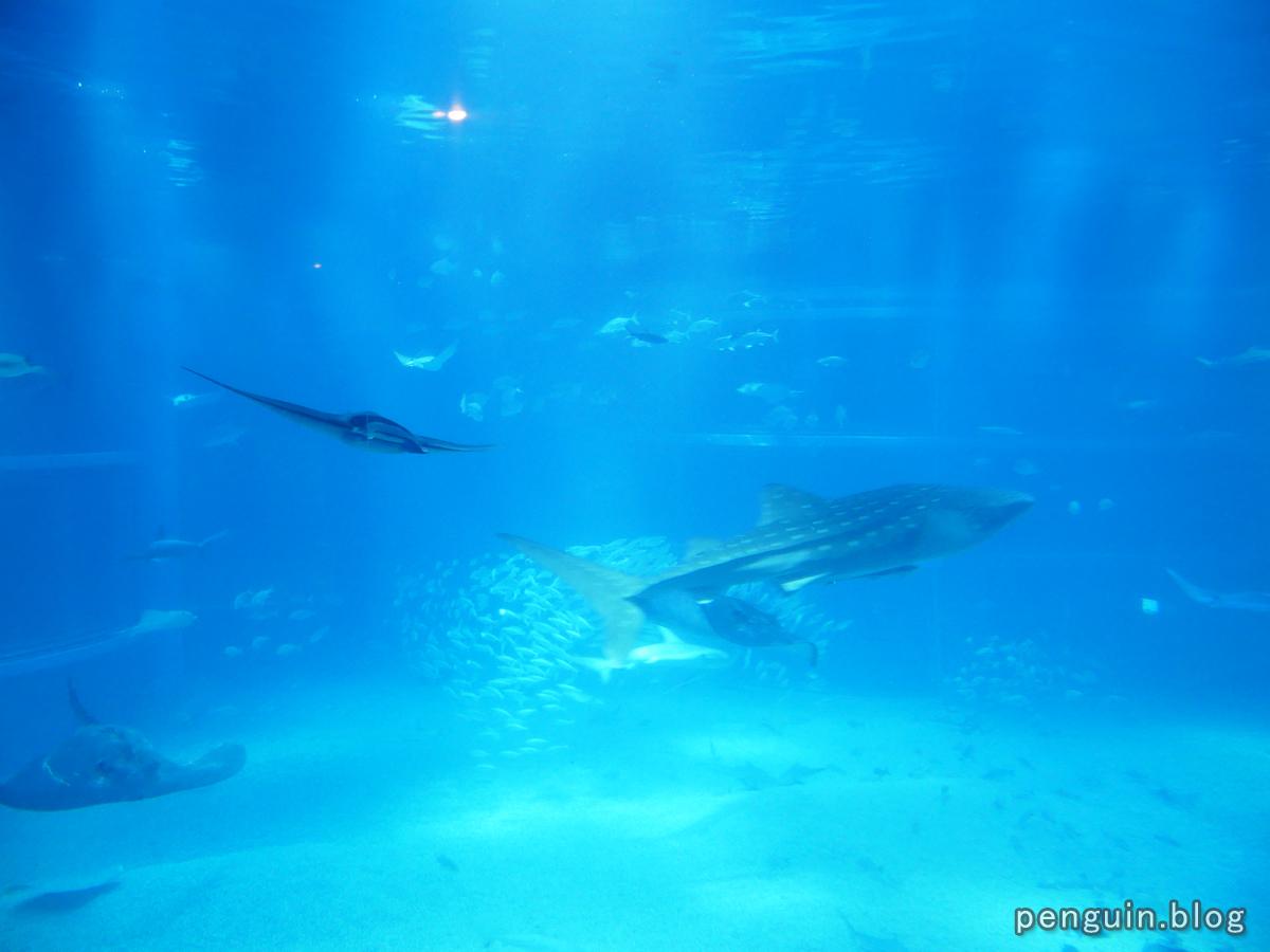 太平洋水槽3